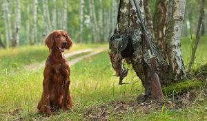 Advantages And Downsides Of Hunting With A Hunting Dog