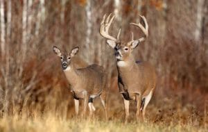 Hunting Security Tips everyone should know – Be the hunter, not the hunted