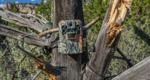 Best Trail Cam Brands in the Market and What They Offer